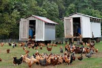 free range chickens west virginia